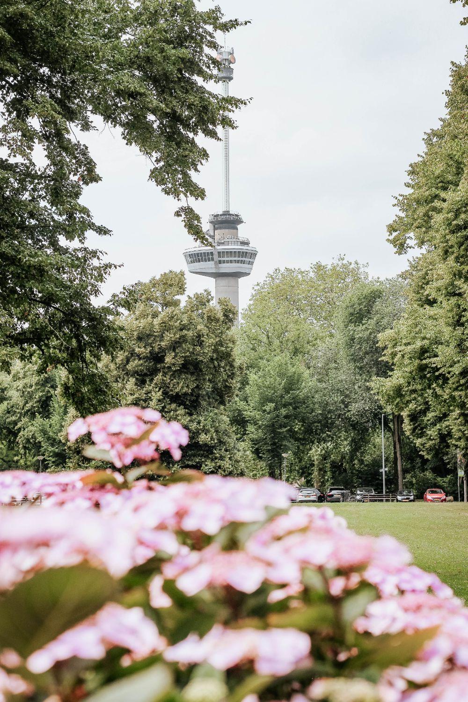 صور روتردام، صور سفر، أفضل المعالم السياحية في روتردام، برج يوروماست