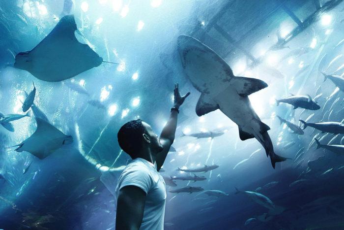 صور سفر، المعالم السياحية في الامارات اكواريوم، حوض الأسماك، دبي مول،، دبي