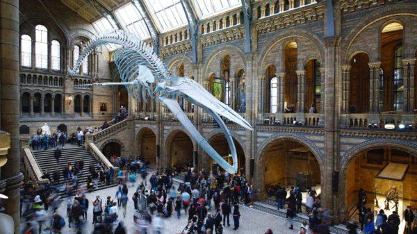 صور سفر، المعالم السياحية في المملكة المتحدة متحف التاريخ الطبيعي، لندن