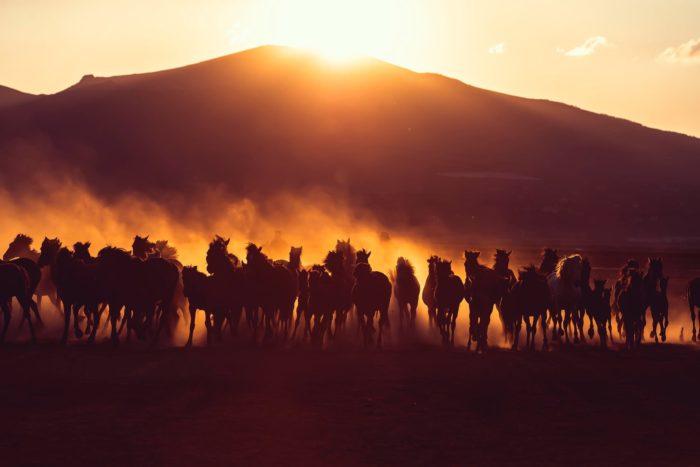 صور سفر، المعالم السياحية في تركيا الأحصنة، كابادوكيا