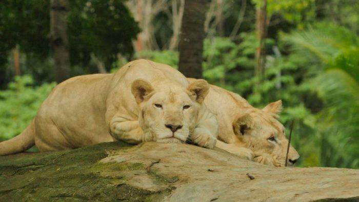 صور سفر، المعالم السياحية في جاكرتا، حديقة حيوان راغونان