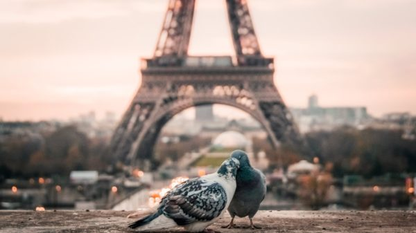 صور سفر، المعالم السياحية في فرنسا برج ايفل، باريس