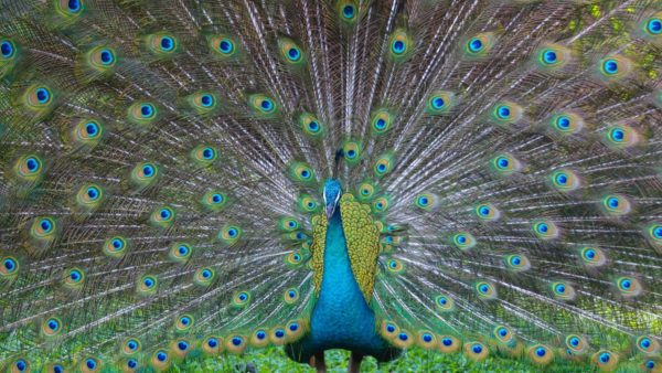 صور سفر، المعالم السياحية في ماليزيا حديقة الطيور، كوالالمبور