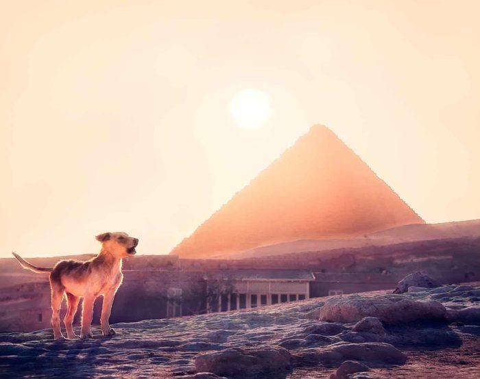 صور سفر، المعالم السياحية في مصر، الجيزة