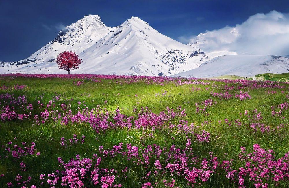 صور سفر، أجمل المواقع الطبيعية في اوروبا، جبال الألب السويسرية، سويسرا