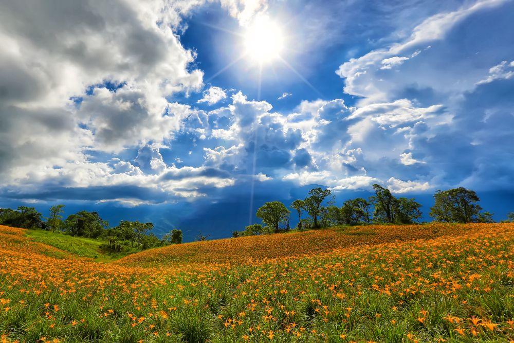 صور سفر، أجمل حقول الزهور في العالم، حقول الزنابق، تايوان