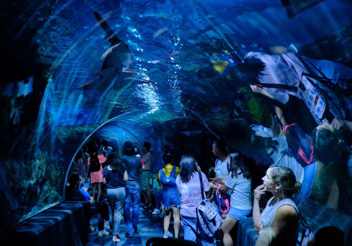 صور سفر، صور بانكوك، أهم المعالم السياحية في بانكوك، سي لايف بانكوك