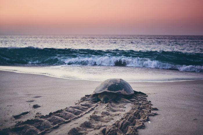 صور سفر، صور عمان، أهم الأماكن السياحية في عمان، محمية السلاحف في رأس الجنز