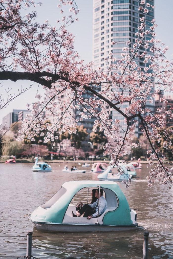 صور طوكيو، صور سفر، أفضل المعالم السياحية في طوكيو، حديقة أوينو