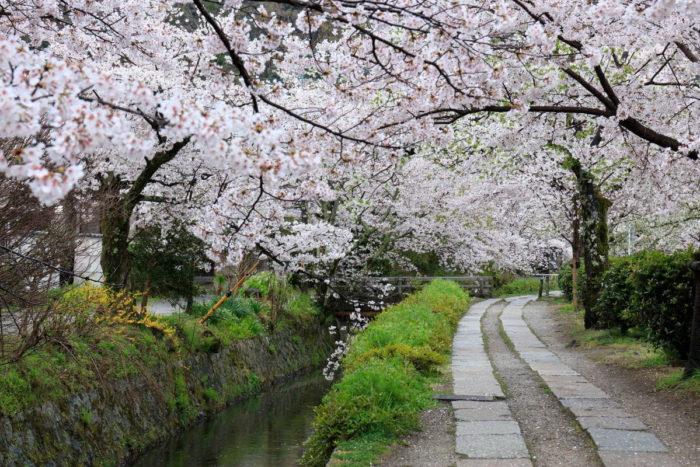صور كيوتو، صور سفر، أفضل المعالم السياحية في كيوتو، شارع الفيلسوف