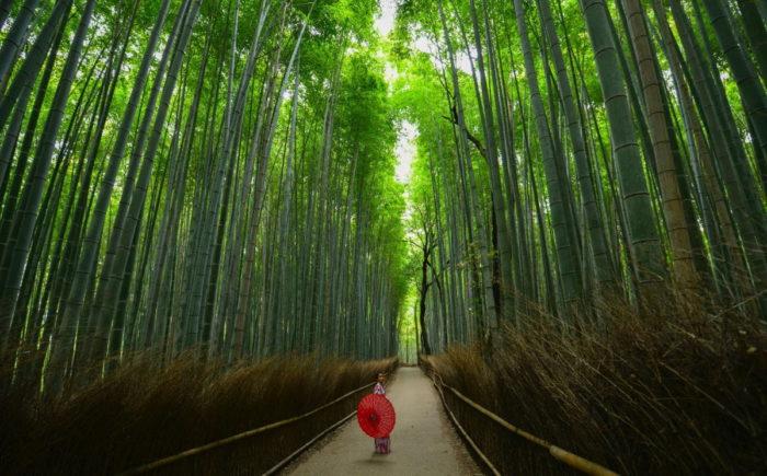 صور كيوتو، صور سفر، أفضل المعالم السياحية في كيوتو، غابات أراشياما