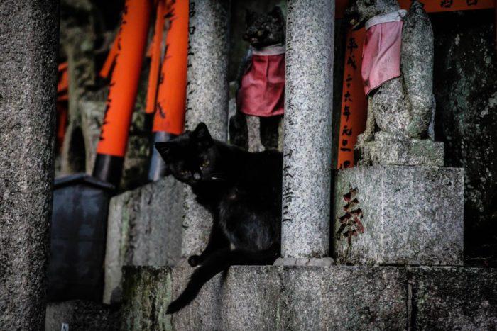 صور كيوتو، صور سفر، أفضل المعالم السياحية في كيوتو
