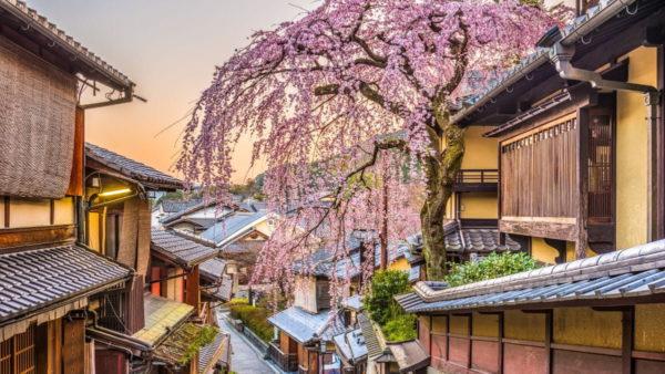 صور كيوتو ، صور سفر، أفضل المعالم السياحية في كيوتو، غيون